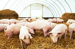 农业农村部:预计下半年猪肉供需关系进一步趋紧 猪价继续上涨压力较大