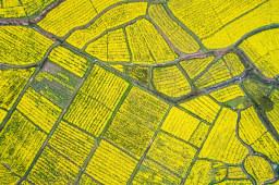 农业农村部:水产品、蔬菜等优势农产品出口总体平稳