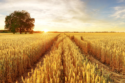 上半年我國農產品進出口額1086.5億美元 同比增1.4%