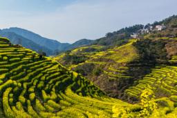 贵州将建1000个乡村振兴示范村