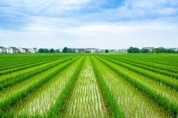 农业农村部:今年夏粮丰收很有基础