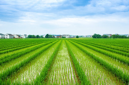 宁夏前4月农业农村经济运行稳中向好